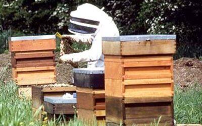 Πράσινο φως για εκπαιδεύσεις μελισσοκόμων και Κέντρα Μελισσοκομίας